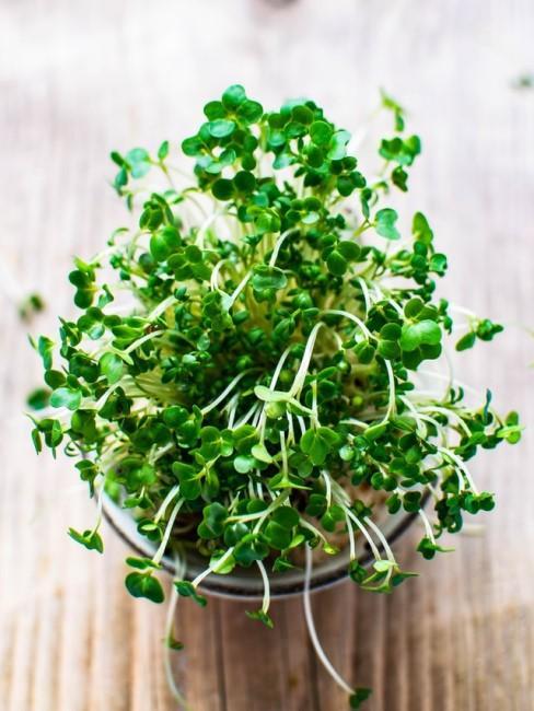Microgreens in der Küche selber anbauen