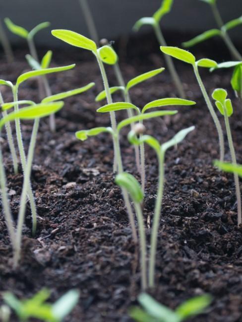 Kleine grüne Pflanzen wachsen drinnen