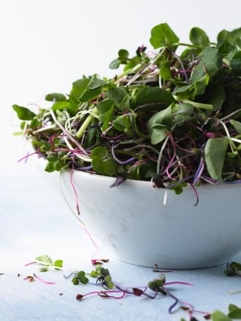 Microgreens für den Salat