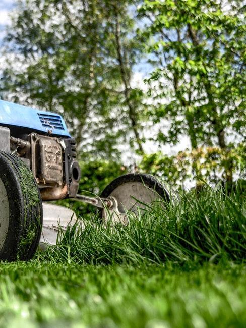 Rasen mähen und vertikutieren um Klee zu verhindern