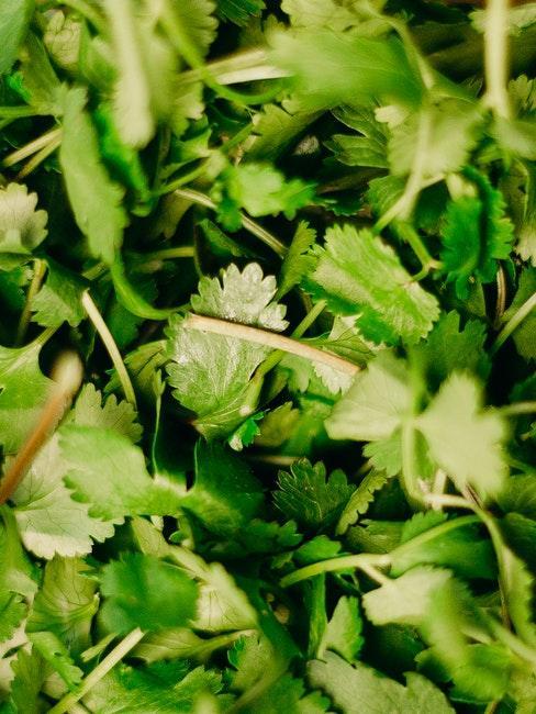Damit Salat machen statt Unkraut entfernen