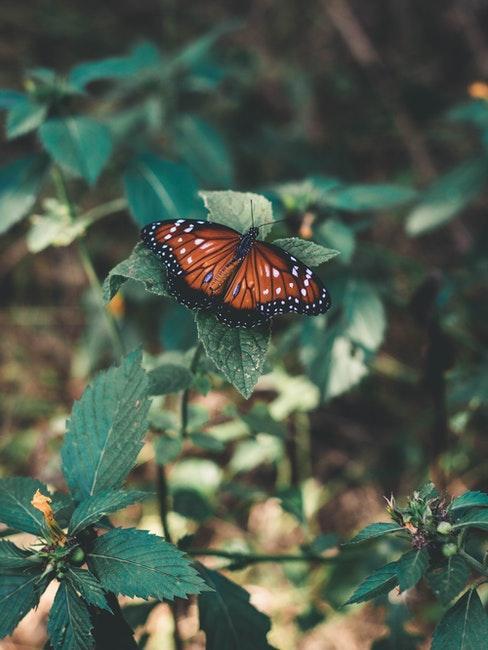 Schmetterling auf grüner Pflanze im Garten