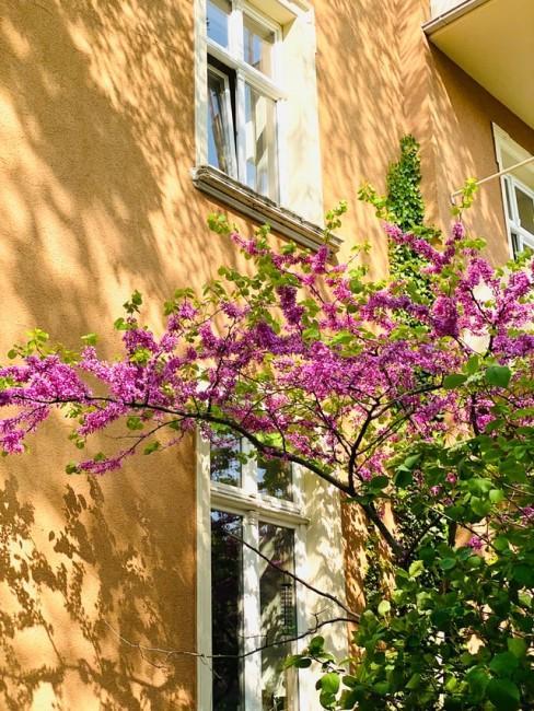 Bunte Blumen vor gelbem Haus
