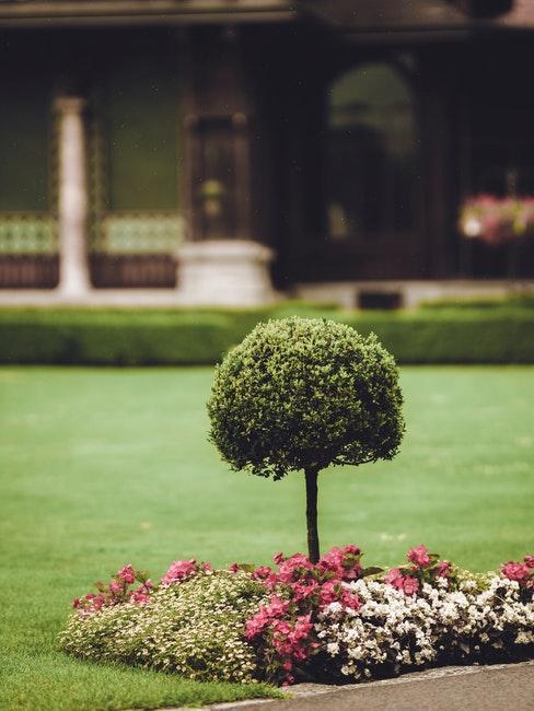 Kleine runde Gewächse sind ideal für den Vorgarten