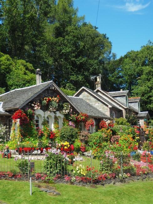 Pflanzen und Blumen wuchern im Vorgarten