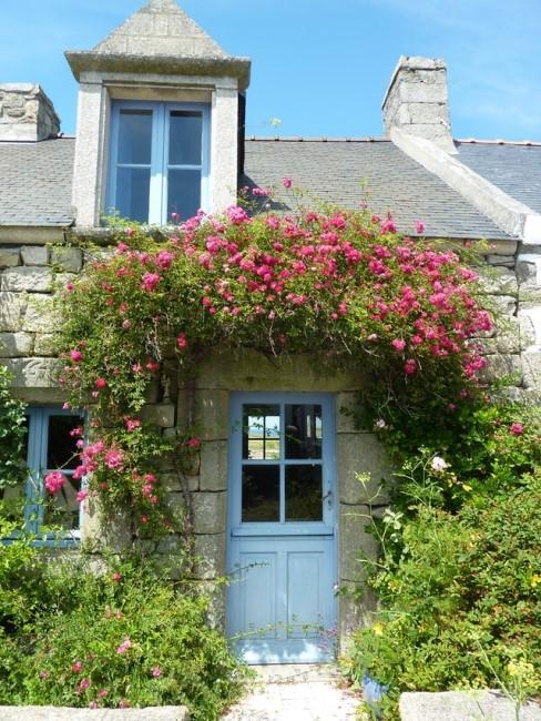 Pinke Blumen wachsen über der Haustür des Landhauses