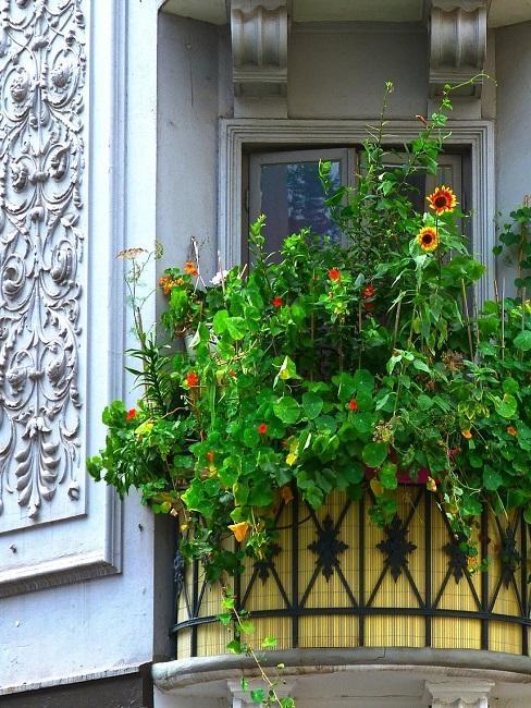 Runder Balkon mit vielen Pflanzen