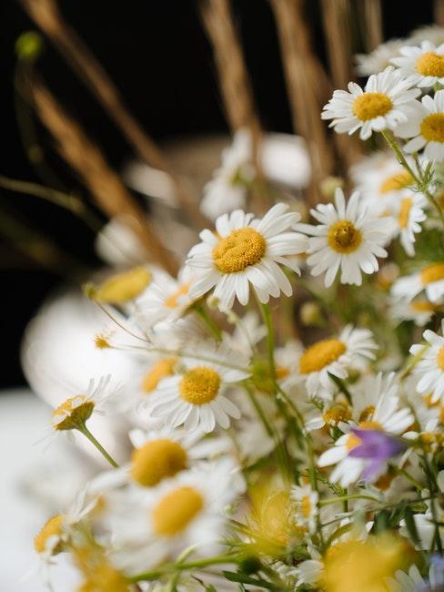 Blumen aussäen im Schrebergarten