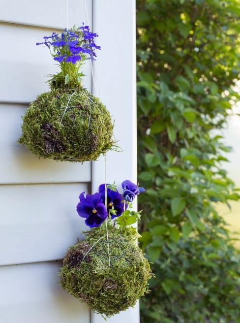 zwei Kokedama-Pflanzen hängen am Sichtschutz der Terrasse