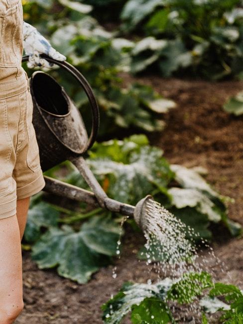 Frau gießt die Gemüsepflanzen im Garten
