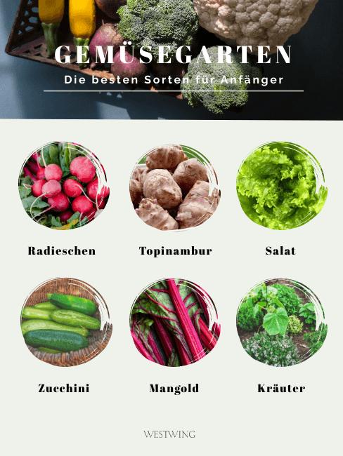 Die besten Gemüsesorten für Anfänger