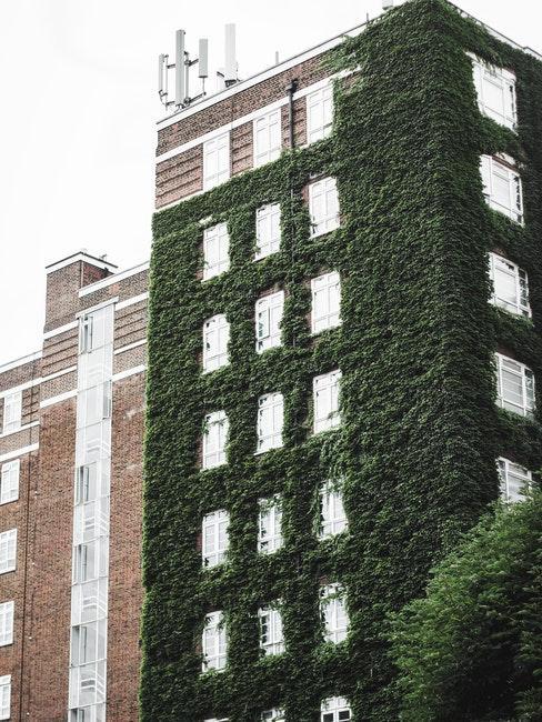 Häuserfassade mit grünen Kletterpflanzen