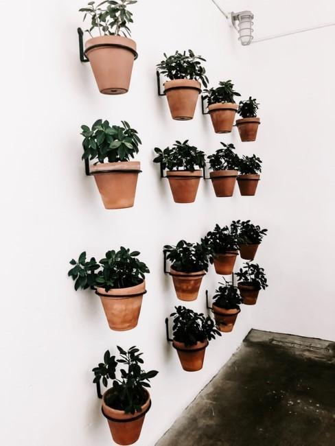 Vertikaler Garten aus verschiedenen kleinen Pflanztöpfen