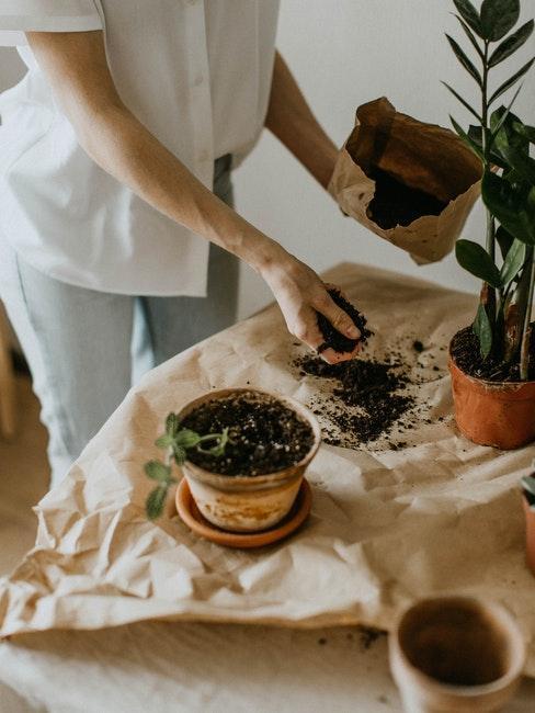 Unterlage verwenden zum Pflanzen umtopfen
