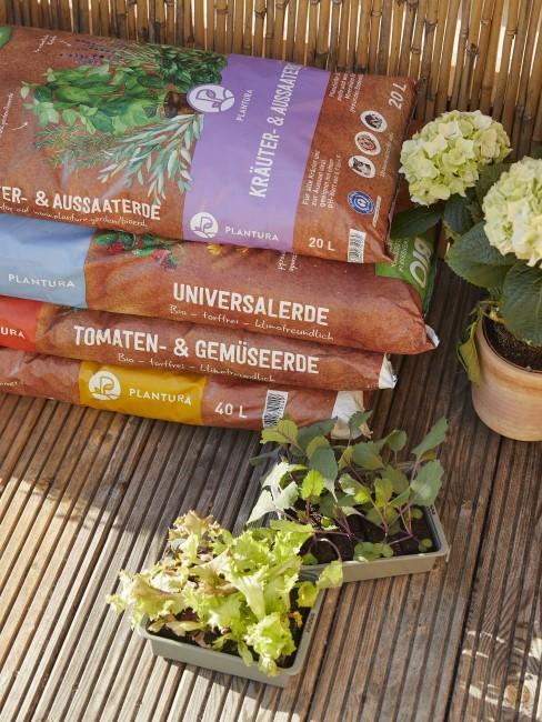 Balkonpflanzen umtopfen mit der richtigen Erde