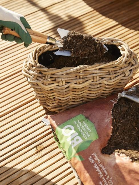 Balkonpflanzen umtopfen mit Erde