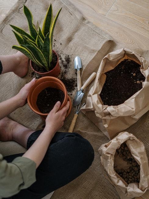 Utensilien zum Zimmerpflanzen umtopfen