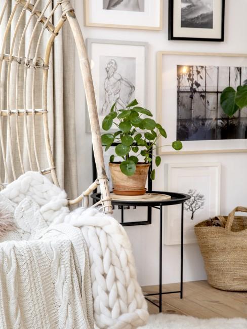 Geldbaum als kleine Zimmerpflanze im Wohnzimmer