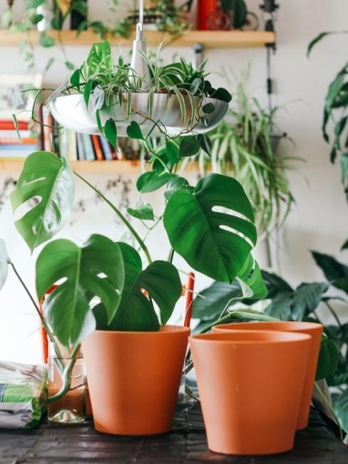 Kleine Zimmerpflanzen stehen auf dem Tisch