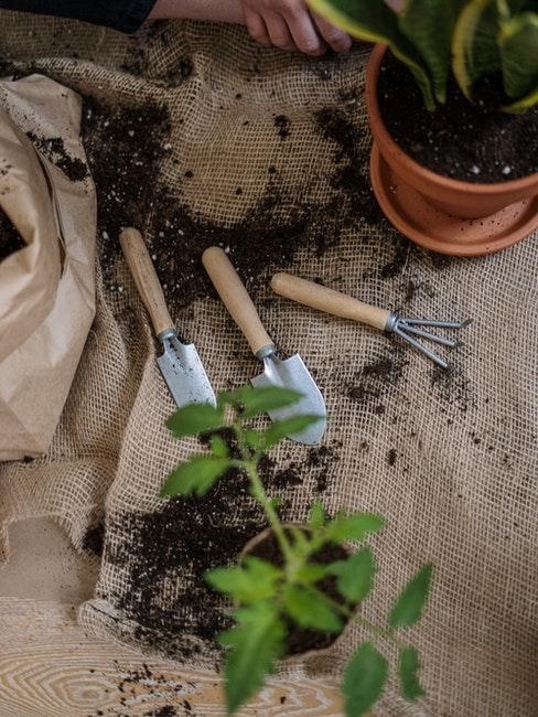 Pflanzen umtopfen mit Erde