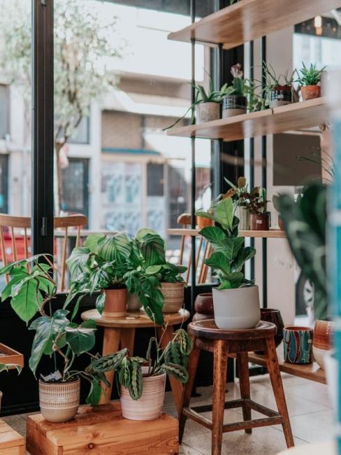 Viele grüne Zimmerpflanzen in Töpfen