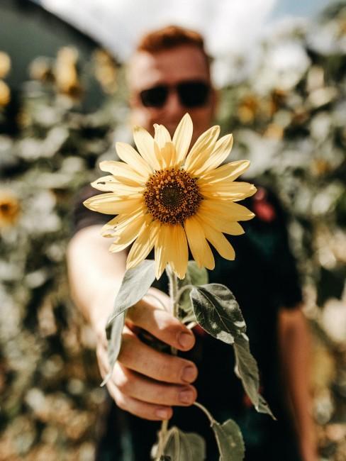 Sonnenblume als Geschenk