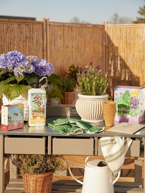 Pflanzen in Vasen neben Pflanzen- und Gartenutensilien