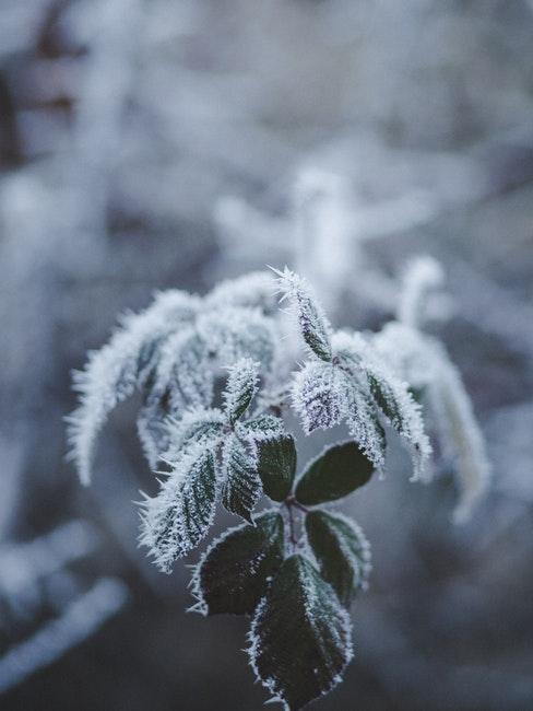 Der Gartenkalender erinnert daran, Pflanzen vor Frost zu schützen