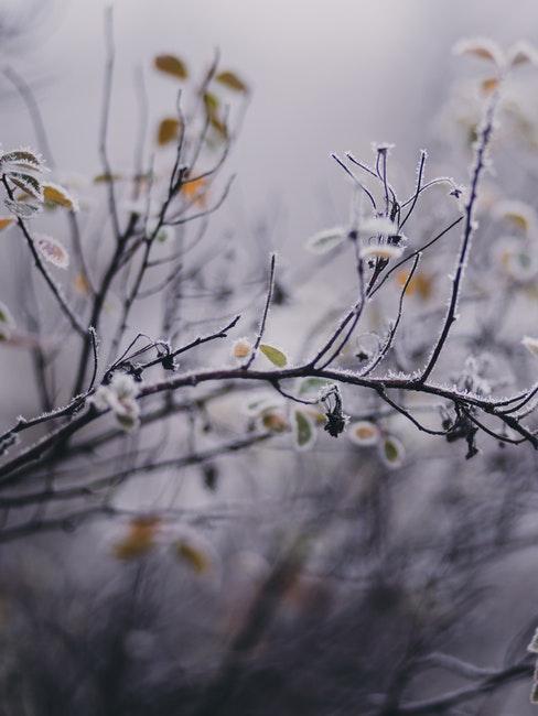 Garten mit Frost auf den Zweigen im Winter