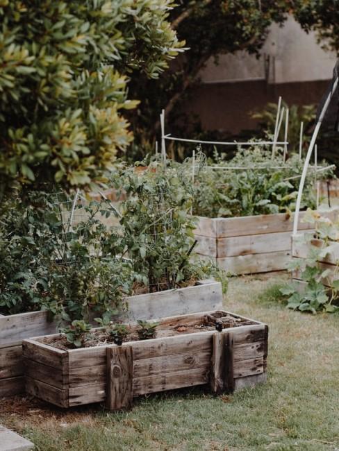 Hochbeete aus Holz stehen im Garten