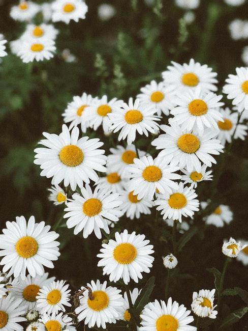 Blumenwiese im Sommer im Garten