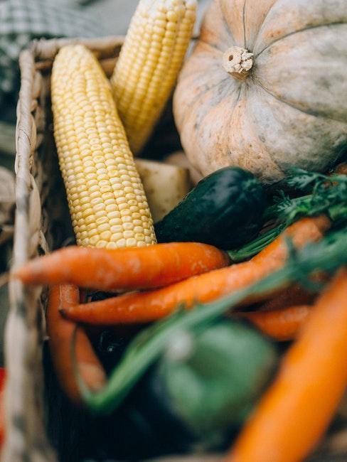 Gartenkalender mit Tipps zur Aussaat und Ernte von Gemüse