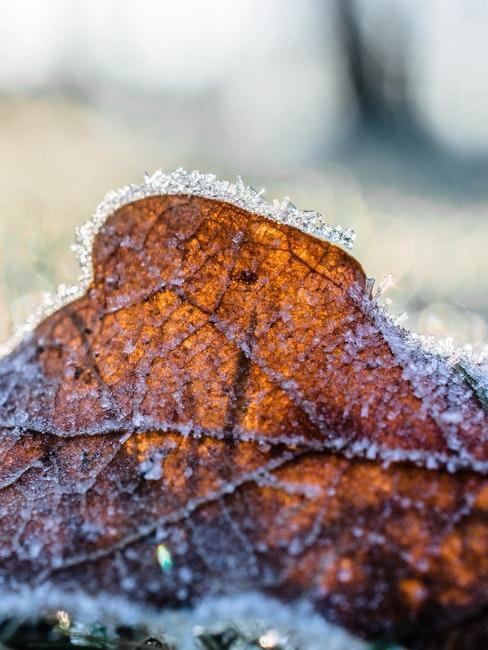Ein Garten muss bei Frost winterfest gemacht werden
