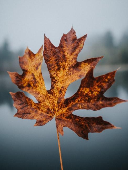 Herbst und Winter als ruhige Zeit im Garten