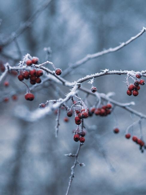 Im Dezember werden die Aufgaben im Gartenkalender weniger