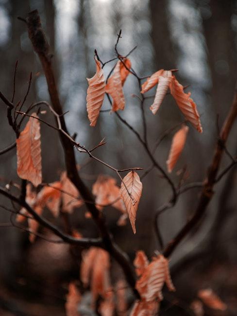 Herbst im Garten bedeutet weniger zu tun