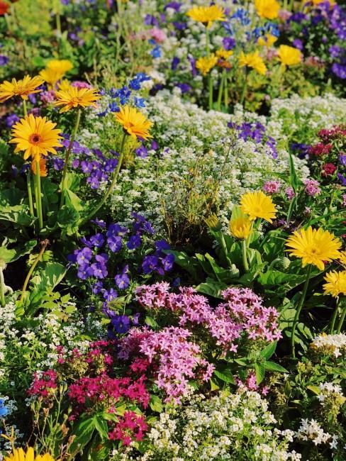 Blumenwiese mit gelben Gerbera