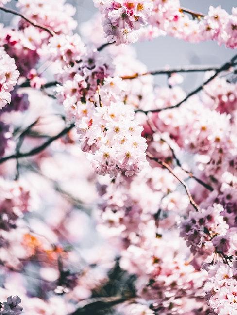 Im Frühling gibt es im Garten viel zu tun