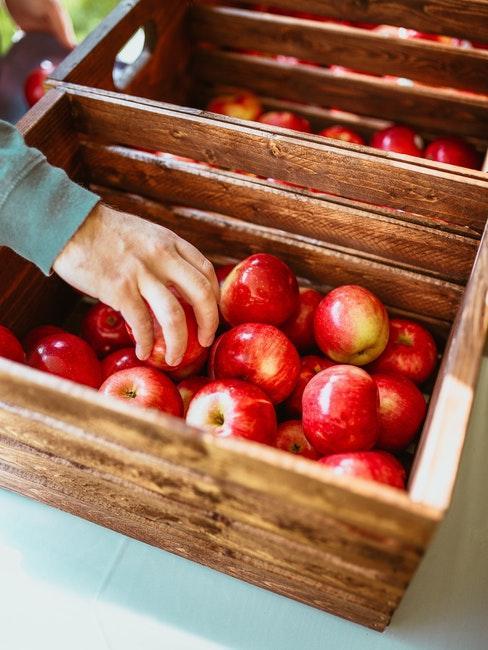 Im Herbst kann laut Gartenkalender die Apfelernte starten