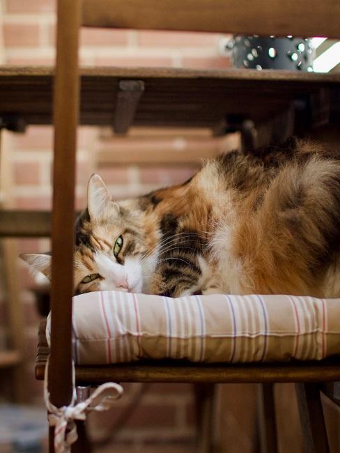 Katze, die auf Balkonstuhl liegt