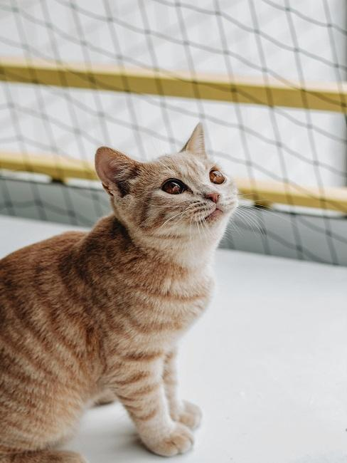 Katze auf einem Balkon mit Katzenetz