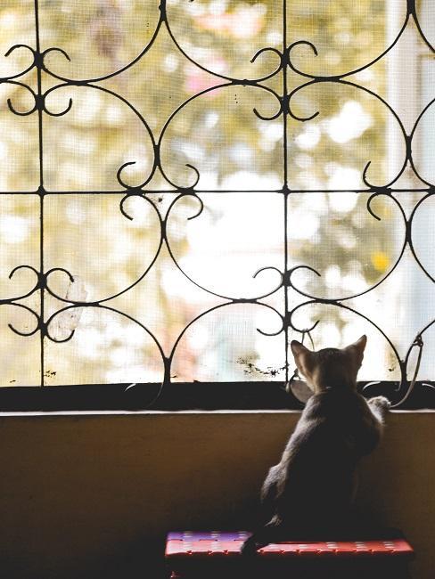 Katze sitzt vor einem Gitter mit Katzenetz