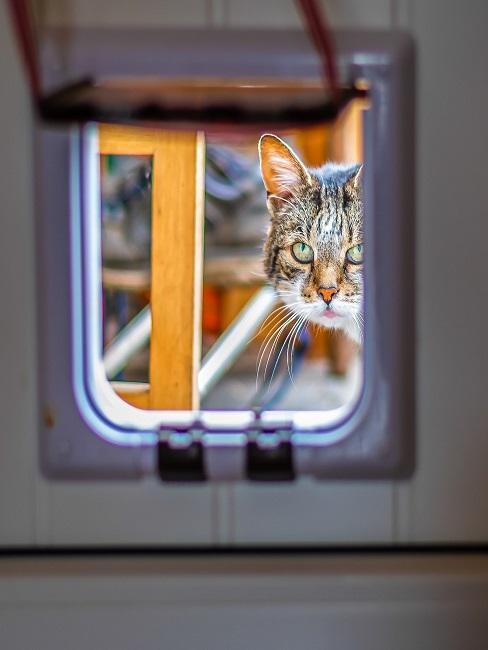 Blick durch eine Katzenklappe, dahinter eine Katze