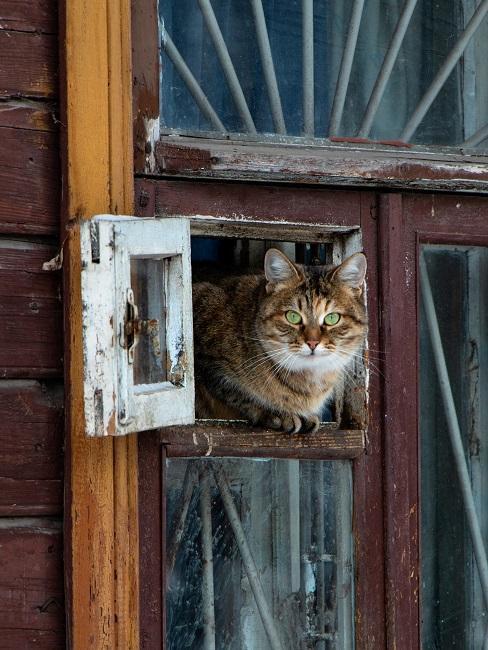 Katze, die durch eine Fensterklappe kriecht