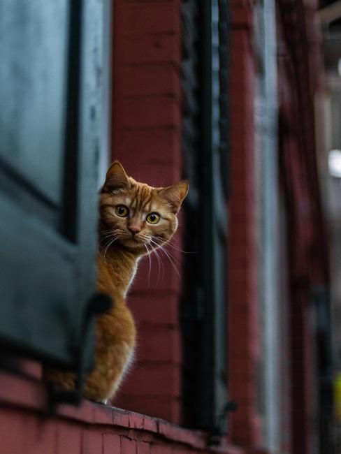 Katze schaut aus einem Fenster