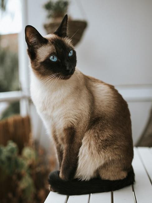 Katze sitzt auf einem Tisch auf einem Balkon