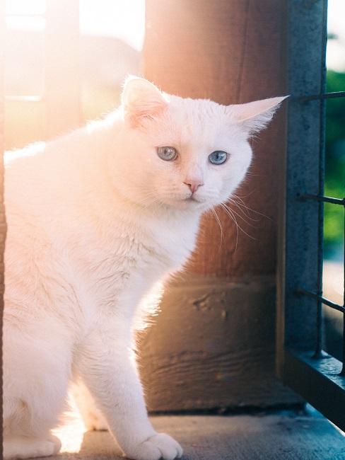 Weiße Katze an einem Balkongeländer