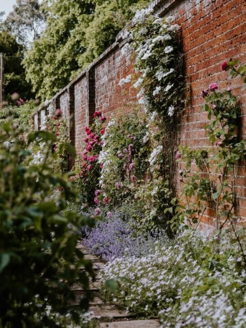 Begrünte Wand im Garten mit Blumen