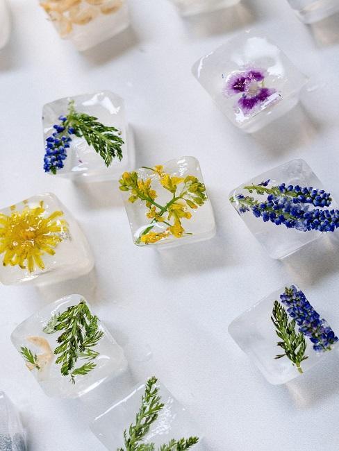 Eiswürfel mit unterschiedlichen eingefrorenen Blüten