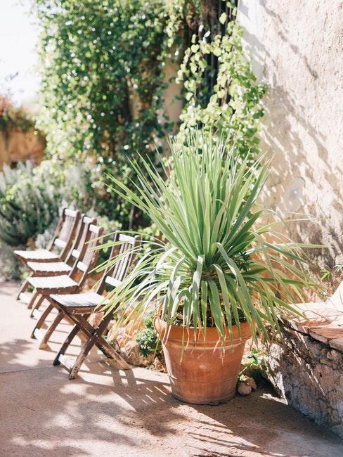 Kübelpflanze zur Gestaltung des Hinterhofs